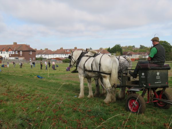 sutton common community planting