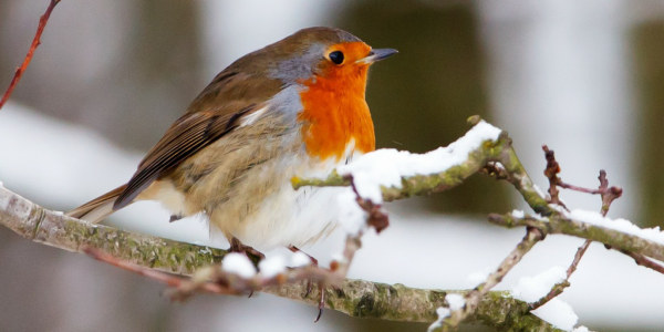 winter wildlife garden tips