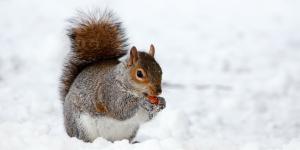 winter wildlife tips squirrel